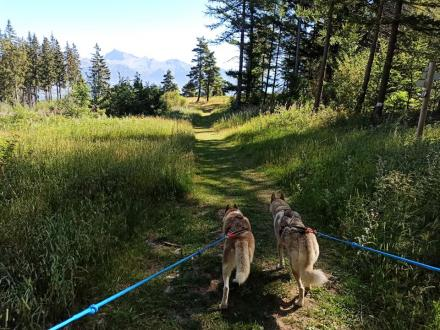 Cani-randonnée ©.photo Travel dog