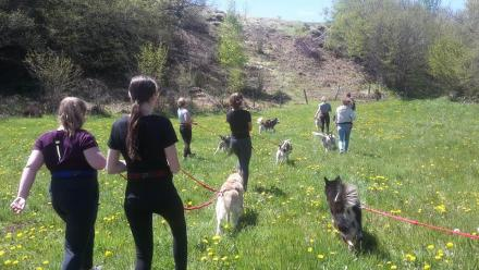 Photo cani-randonnée