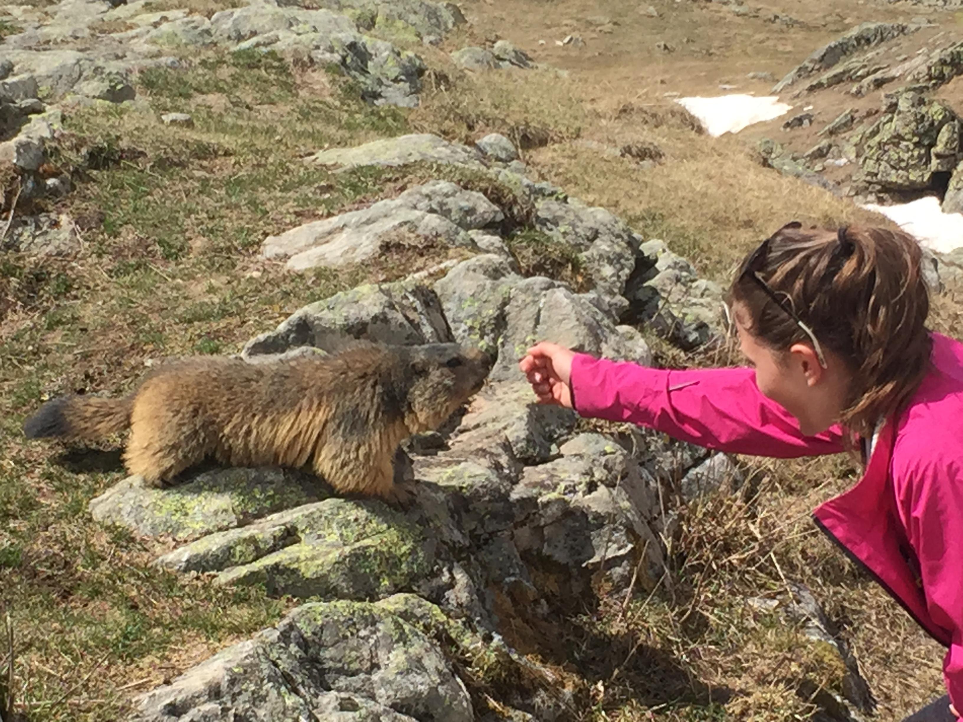 Découverte des marmottes dans le Haut Champsaur